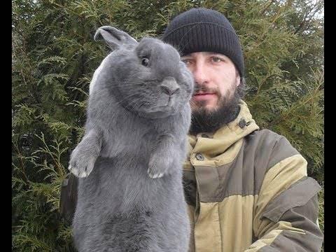 Трава для кроликов: выбор сена. можно ли давать им крапиву, пижму и полынь? чем нельзя их кормить?