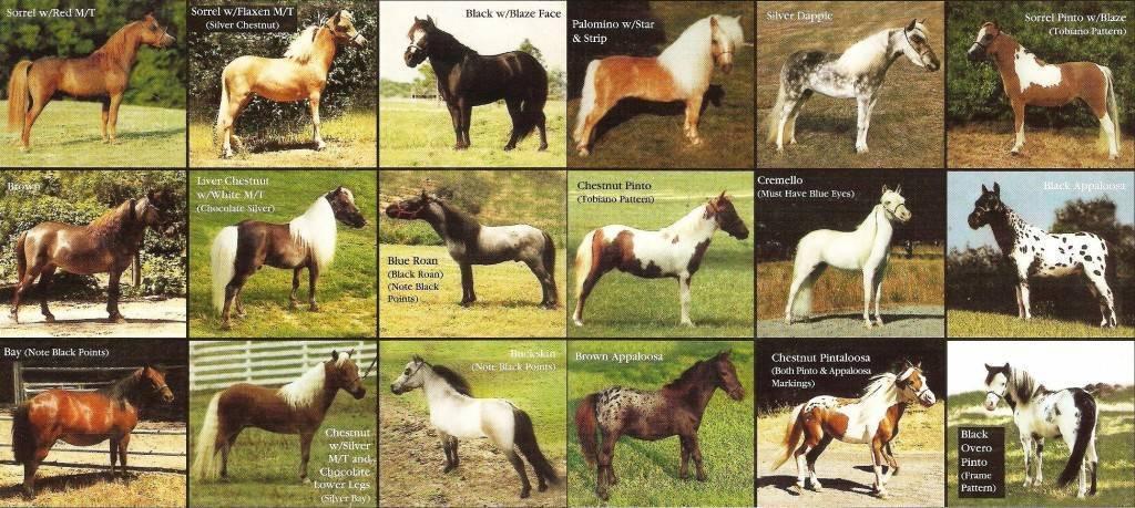 Масть лошади — википедия. что такое масть лошади