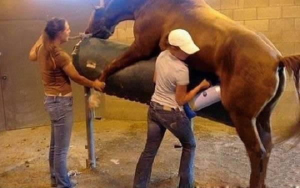 Спаривание и размножение лошадей и других животных