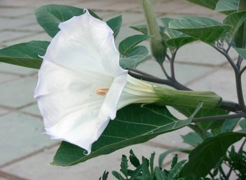 Как выращивать цветы из семян?