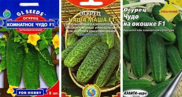 Огурец гектор f1: описание сорта и особенности выращивания