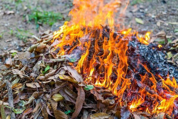 Почему рассада баклажанов вянет и падает? что делать если сохнут и желтеют листья? пошаговая инструкция по лечению