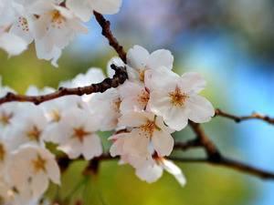 Как нужно садить вишню весной и осенью