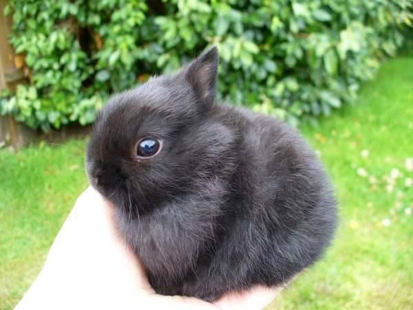 Приручение кролика, дрессировка и приучение к лотку