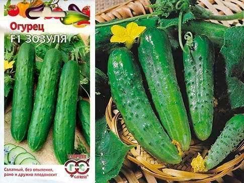 56 самых лучших урожайных сортов огурцов для теплицы: описание и фото | +отзывы