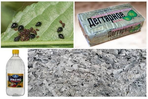 Тля на огурцах в теплице и на участках: как бороться с вредителем, появившимся на листьях химическими, биологическими и народными средствами, чем лучше обработать?