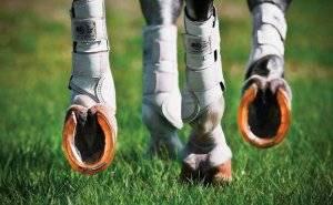 Зачем лошадь подковывать: как правильно прибить подкову, расчистка копыт коня