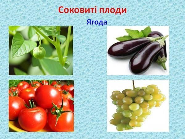 Баклажан — это ягода или овощ, или как его правильно называть