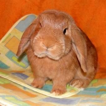 Профилактика и лечение ушного клеща у кроликов