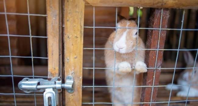 Почему кролик копает дно клетки