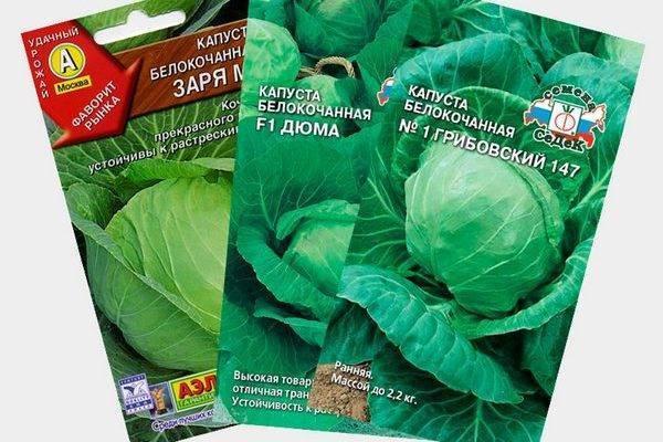 Савойская капуста: лучшие сорта и важные нюансы ухода за культурой