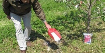 Мучнистая роса на яблоне (13 фото): как бороться препаратами? лечение болезни народными средствами летом