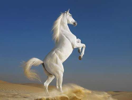 Лошади мустанги (29 фото): особенности породы диких коней. чем отличаются от домашних лошадей, как выглядят и как живут в дикой природе?