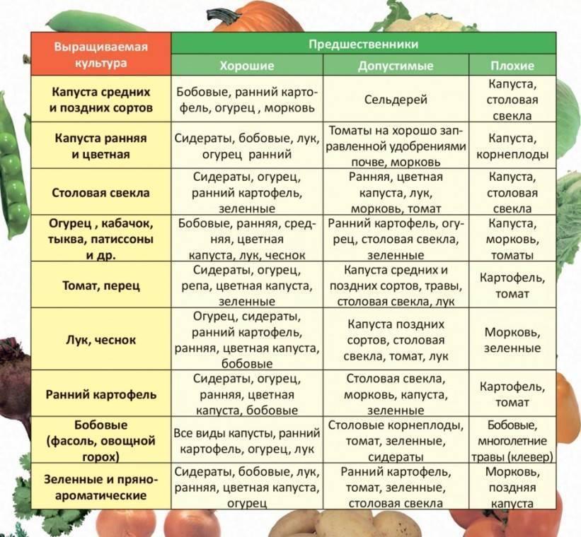 Посадка овощей после капусты на следующий год – что выбрать?