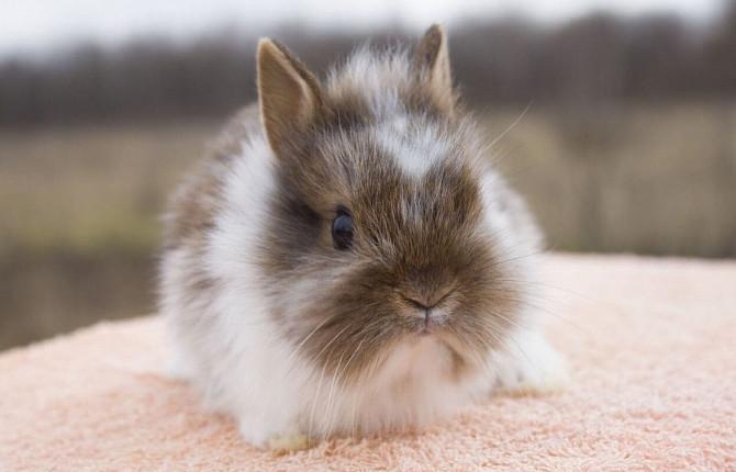 Всё о беременности кроликов