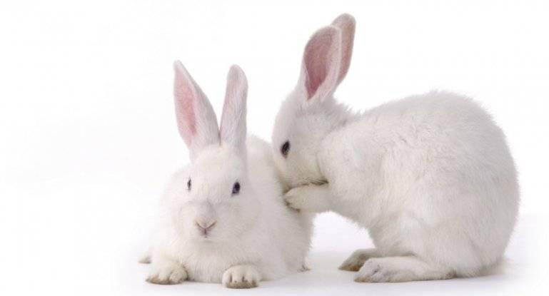 Новорожденные кролики (27 фото): как они выглядят? как кормить крольчат без матери? правила ухода