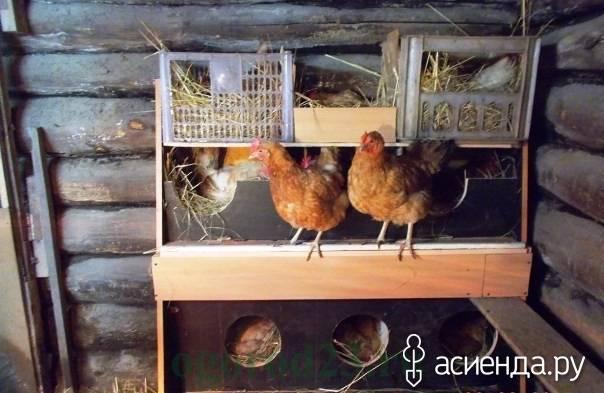 Сколько курица съедает в день корма: суточная норма и рацион