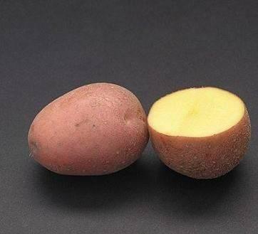 Великолепный картофель лаура: характеристики, описание сорта, фото