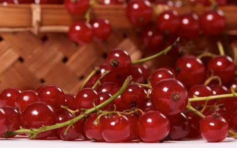 Лучшие сорта красной смородины (фото и описания)