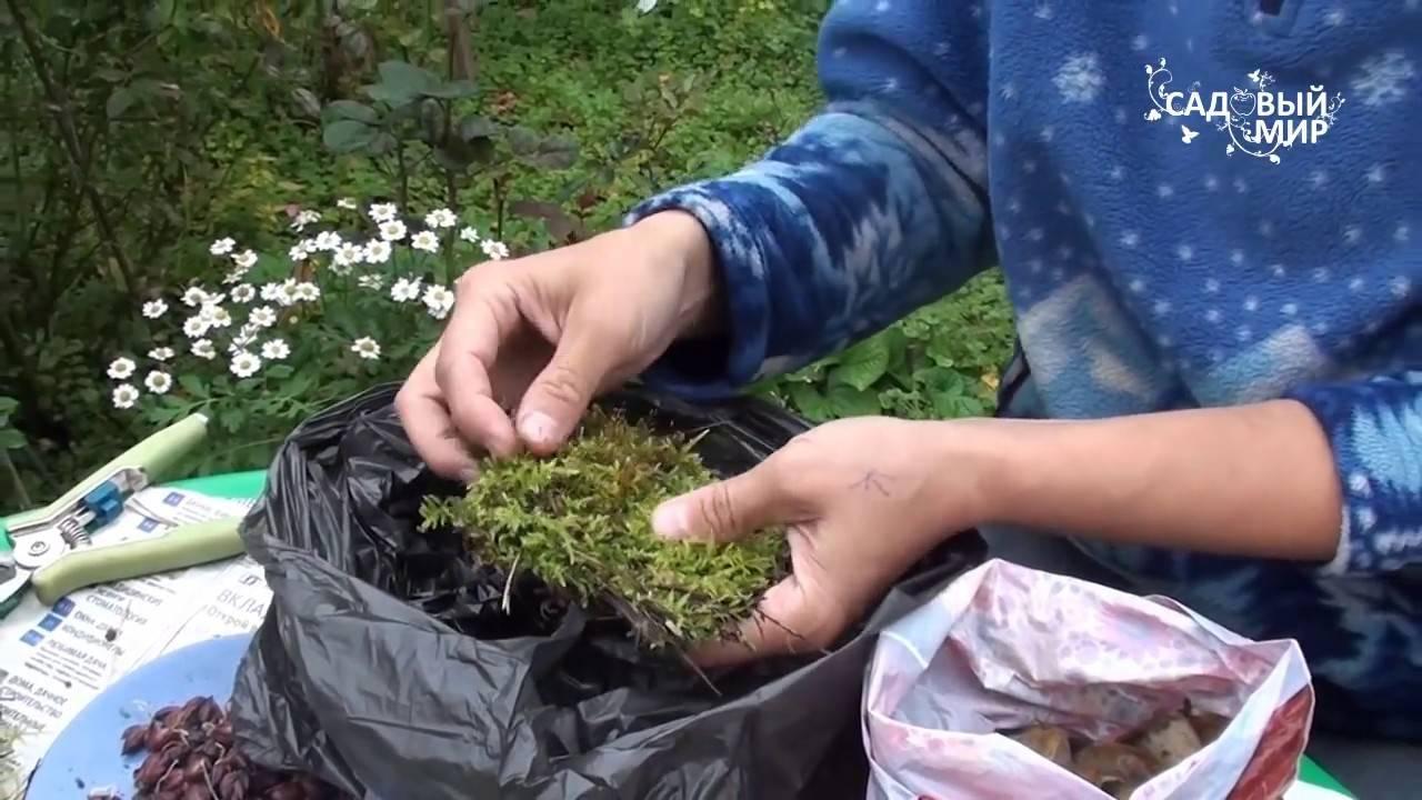 Размножение лилий: как размножить цветы бульбочками, черенками и листьями? как рассадить в открытый грунт?