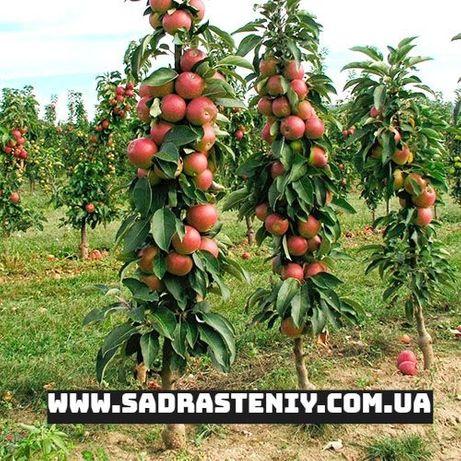 Все о колоновидных плодовых деревьев: сорта для Подмосковья и Сибири
