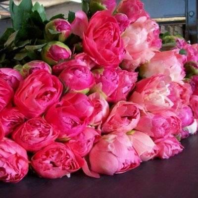 Пионовидная роза: сорта, фото