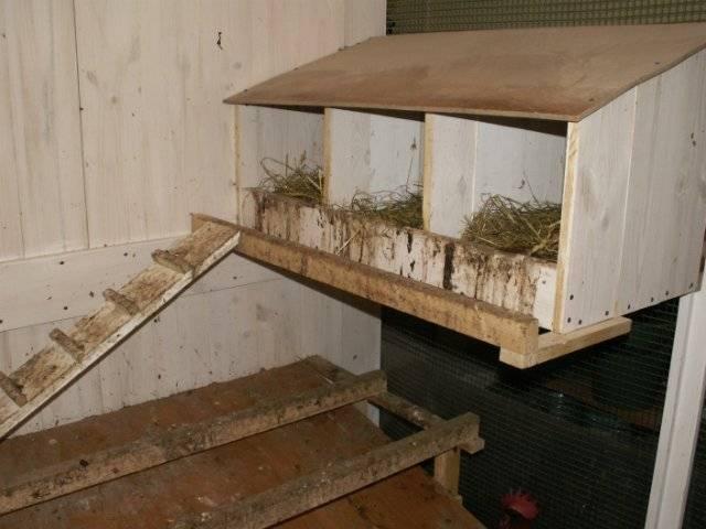 Гнезда для кур несушек своими руками: 3 лучших варианта
