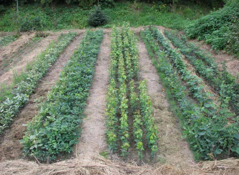 Средства, применяемые для того, чтобы не росла трава в огороде на даче