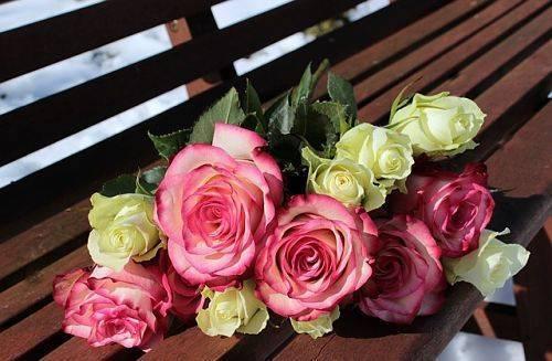Способы укоренения розы из букета в домашних условиях