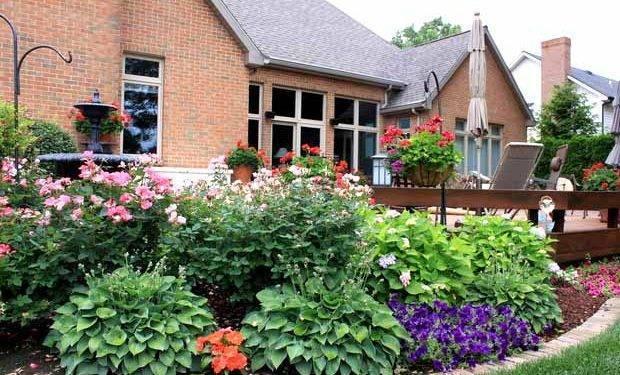 Особенности пересадки хосты – практическое руководство по пересадке для начинающих садоводов