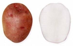 Картофель любава: описание и характеристика, отзывы