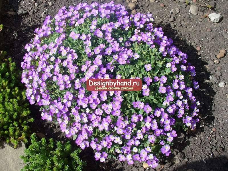 Почвопокровные растения: выбираем лучшие