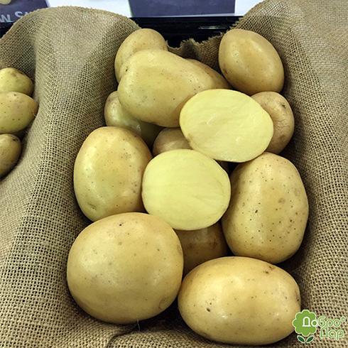 Картофель тимо