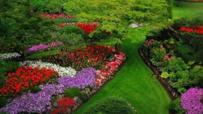 Создание клумбы непрерывного цветения из многолетников