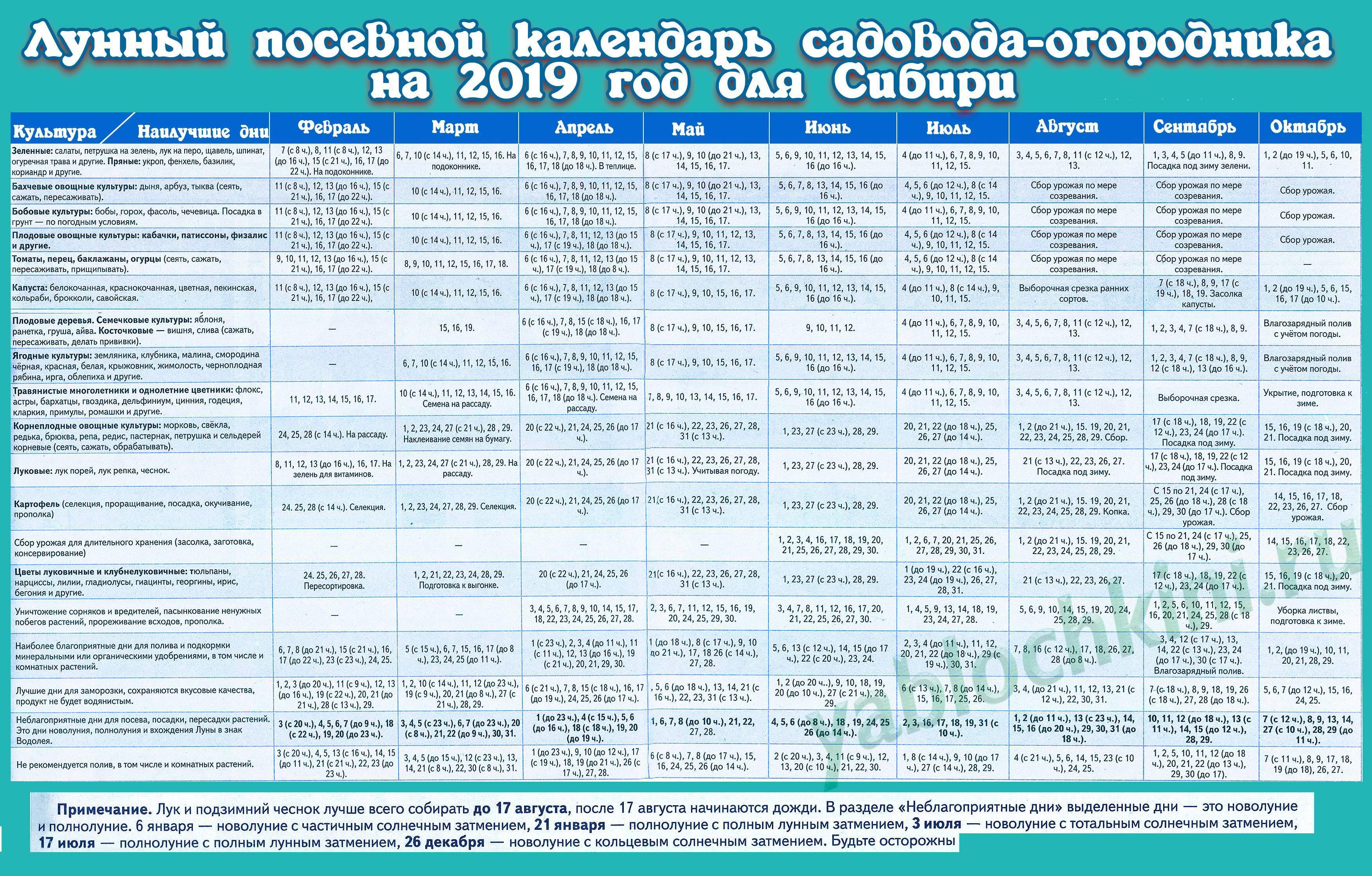 Все о посадке ярового чеснока в Сибири: правила посева и ухаживания