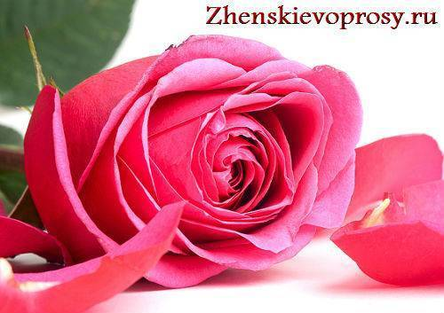 Как сохранить срезанные розы в вазе дольше всего: что можно добавить в воду, чтобы продлить им жизнь