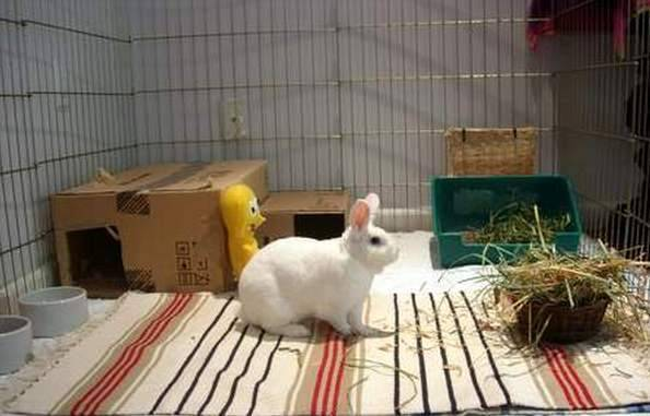 Разводим декоративных кроликов в квартире