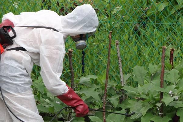 Как вывести муравьев из теплицы с огурцами