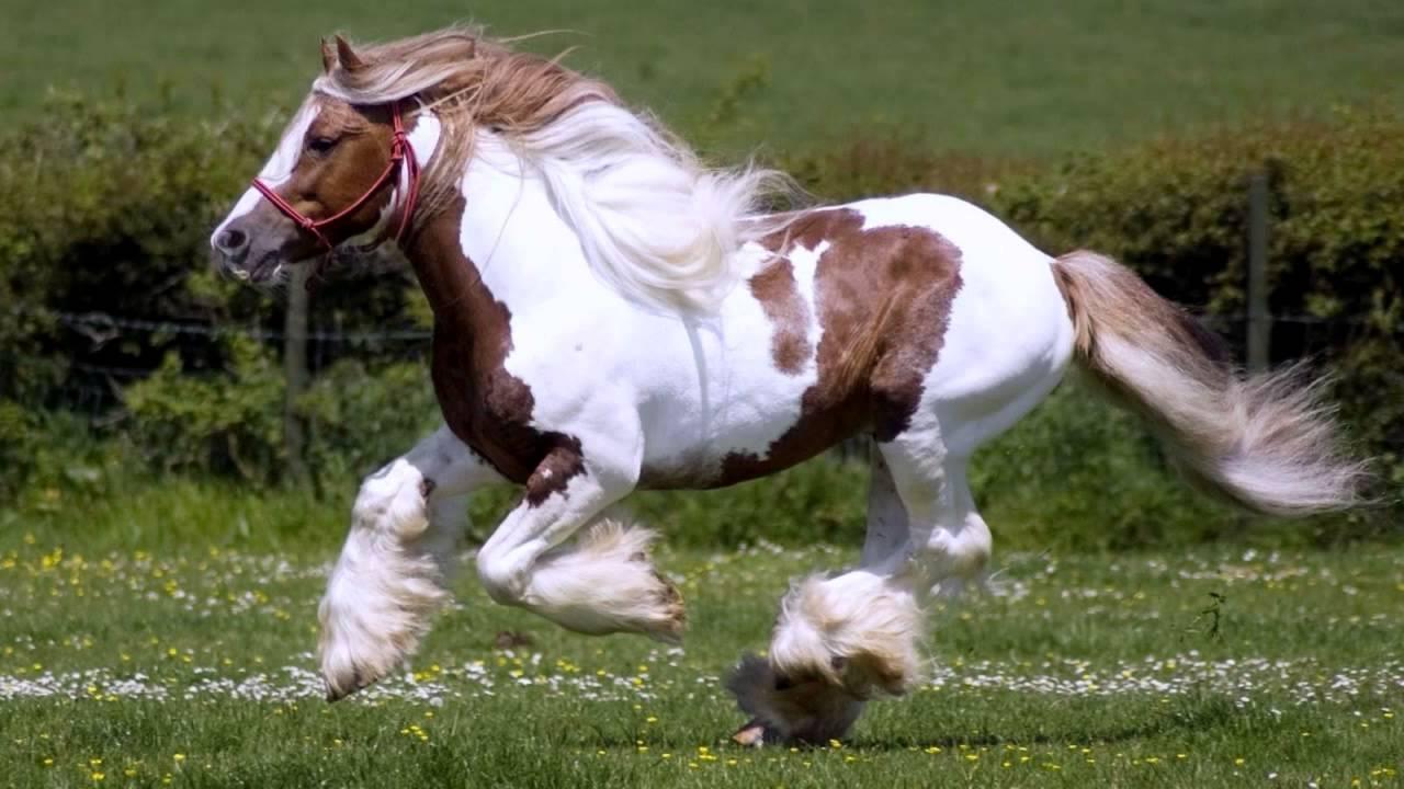 8 самых быстрых лошадей мира