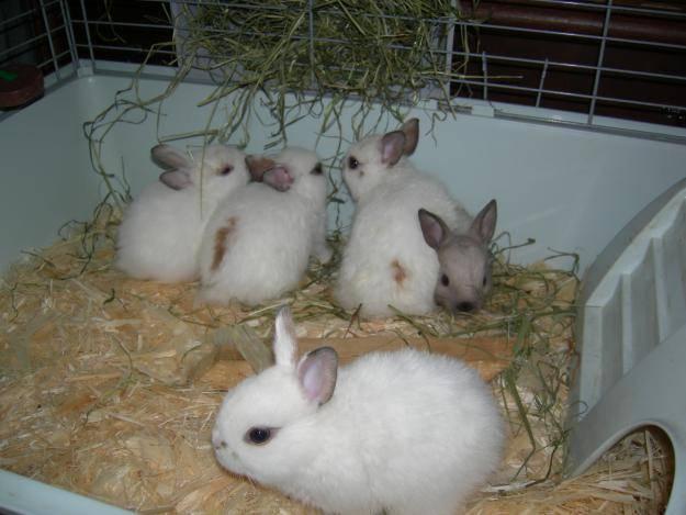 Выращивание кроликов: содержание, кормление, разведение