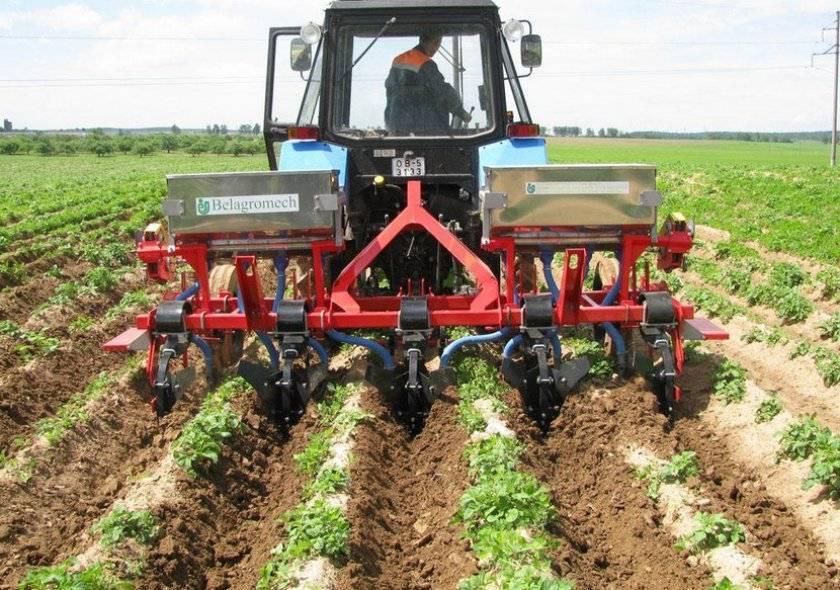 Посадка картофеля весной в открытый грунт: сроки высадки и технология выращивания