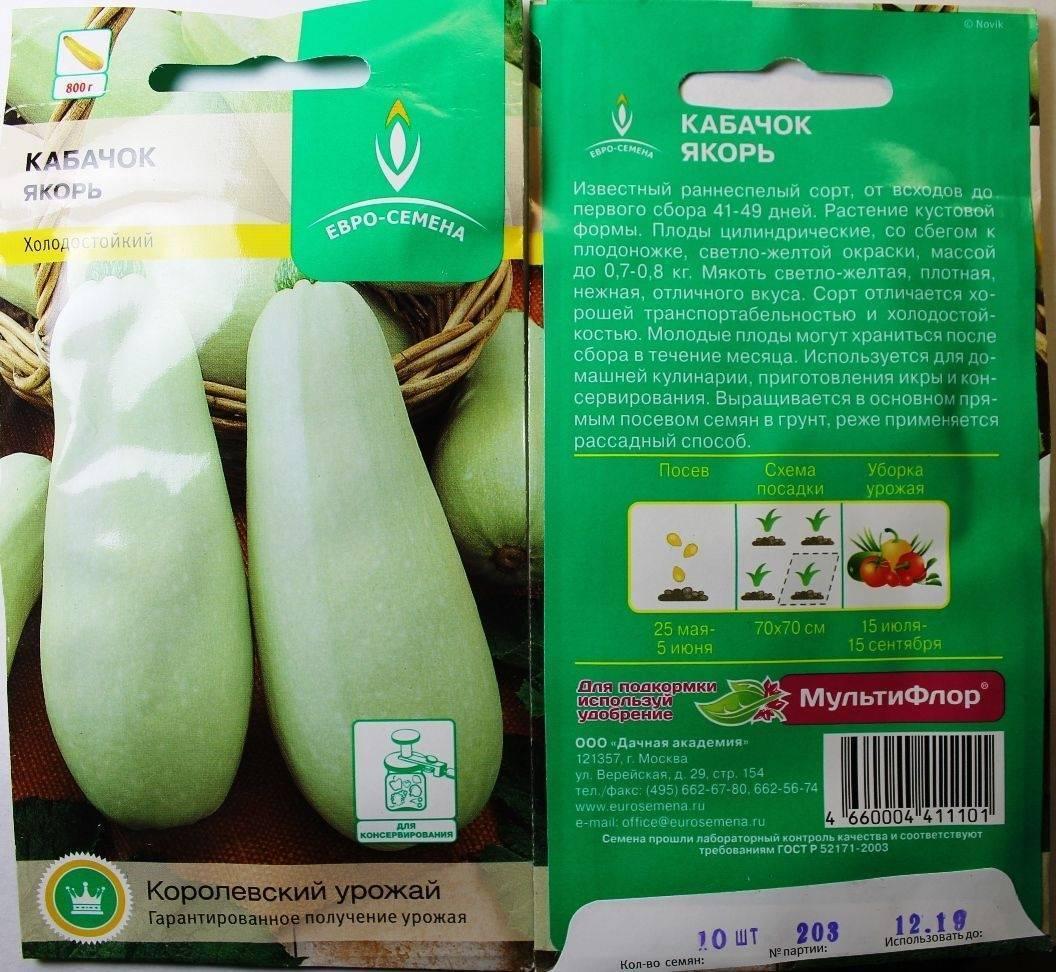Кабачки: диетические овощи семейства тыквенных. посадка семенами в открытый грунт и уход, выращивание рассады (15 фото & видео) +отзывы