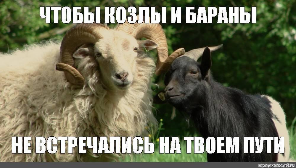 Содержание овец в личном подсобном хозяйстве - технология ухода 2020