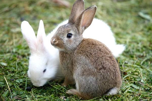 Породы кроликов - самые лучшие виды для домашнего выращивания