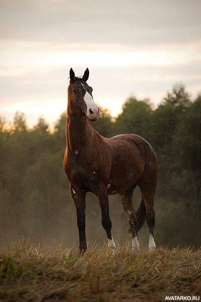 Каурая масть лошади.описание и фото масти