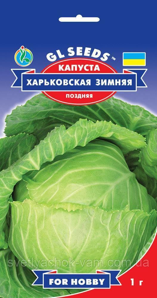 Капуста белокочанная амагер: описание, секреты успешного выращивания