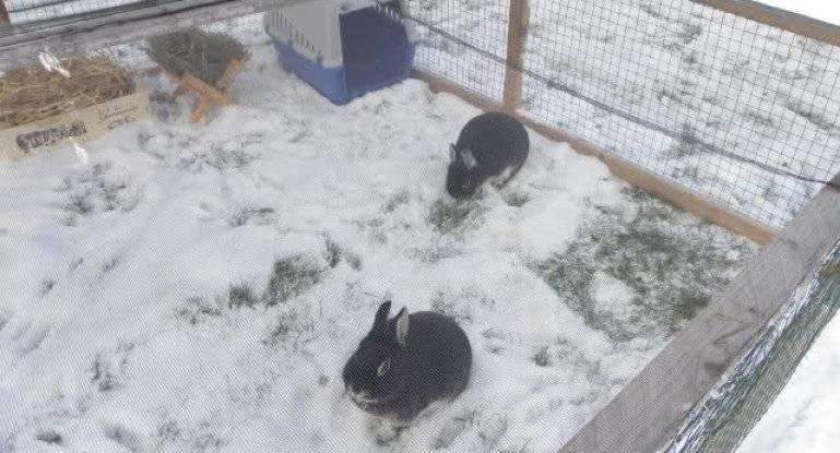 Как построить крольчатник своими руками: пошаговая инструкция