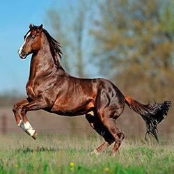 Определение массы, упитанности и промеров лошадей