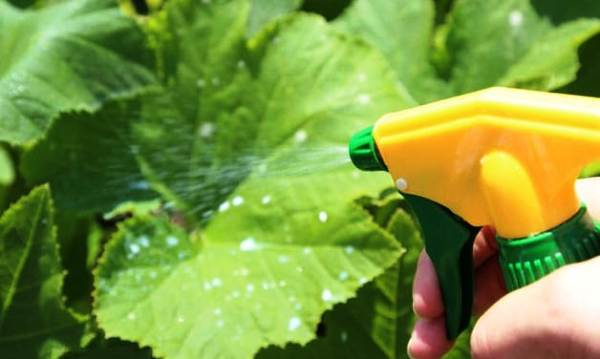 Чем обработать огурцы, чтобы не желтели листья