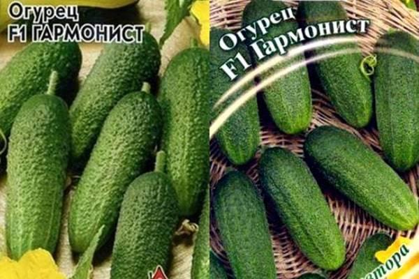 Все о сорте огурца портос: описание, агротехника выращивания и уход